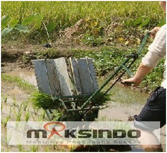 alat menanam padi manual