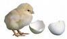 Mesin Penetas Telur Manual 30 Butir (EM-30) 1 tokomesin malang